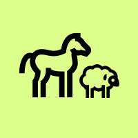 Chevaux, moutons et chameaux