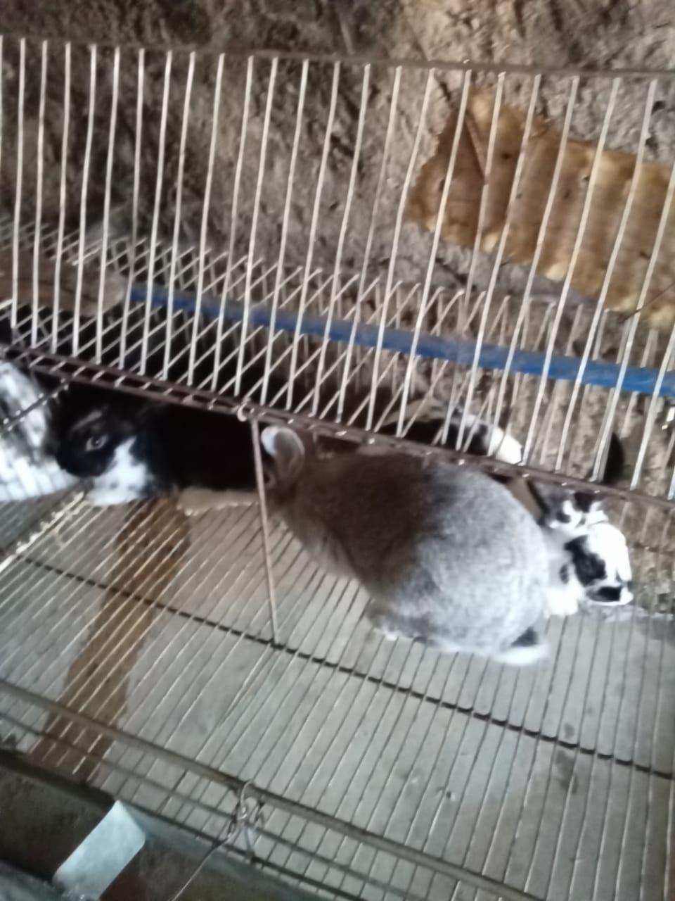 أرانب و خرانق