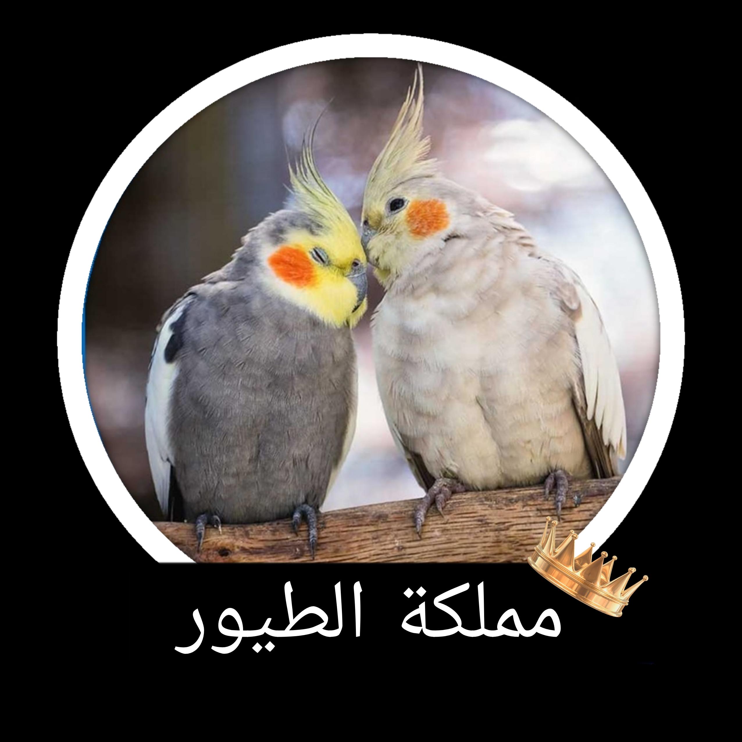 مملكة الطيور