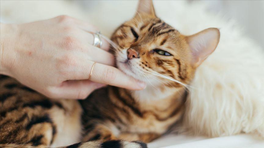 Toutes genre de chatons chez just4you animal